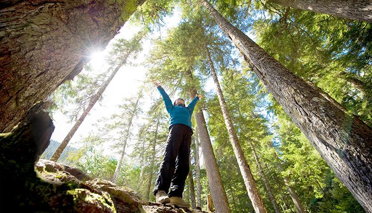 Jour de la Terre 2021 : BMO transforme des transactions en arbres