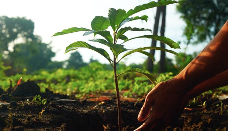BMO lance le Mois de la Terre en soulignant son adhésion à l'initiative Priceless Planet Coalition
