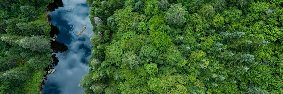 Bird's eye view of trees and river